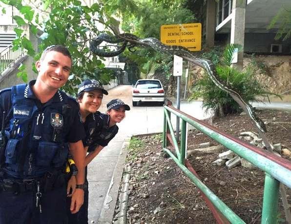 Brisbane Police Snake