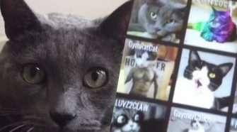 cat-trolling-scruff-app-web