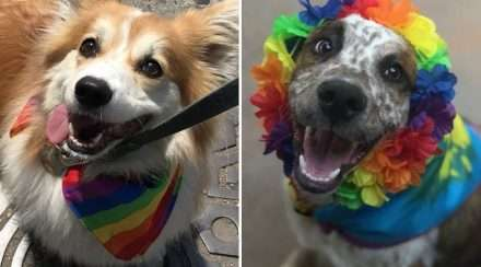 Two proud dogs dressed in rainbow for pride month in the US