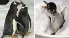 Sydney Gay Penguin sphen and magic