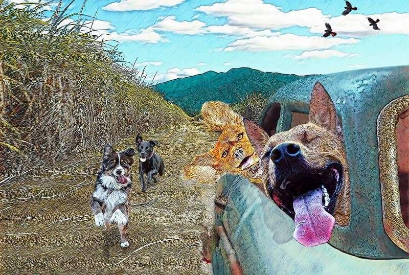 cairns artist mark cochrane doghousefnq