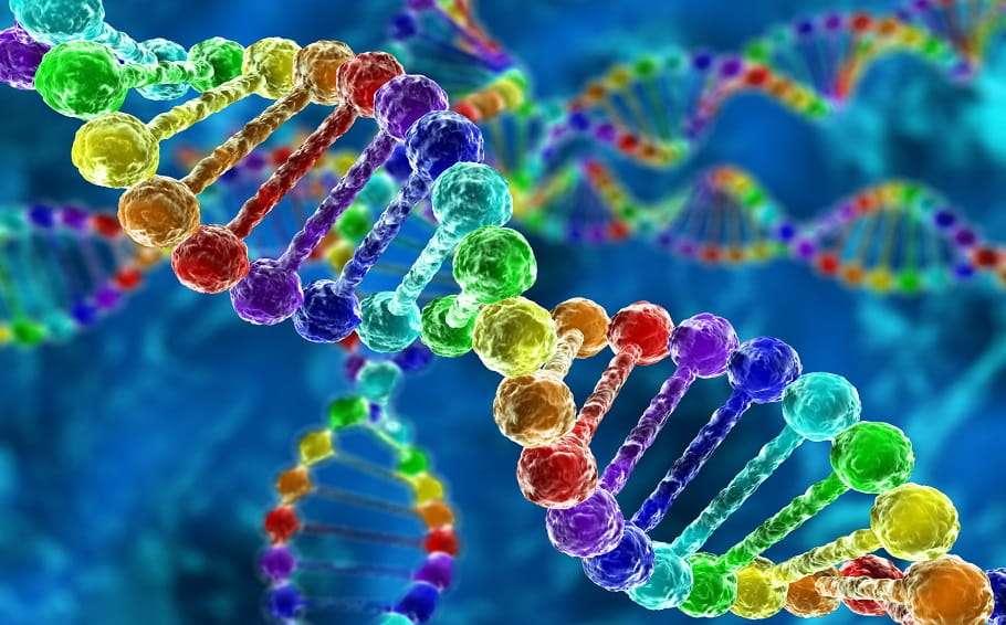 gay gene genetics dna study