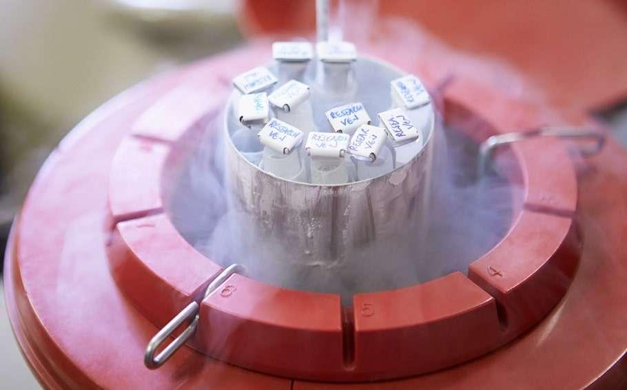 ivf frozen sperm storage sperm bank hiv stock photo