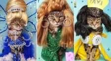rupaws drag race rupauls drag race cat feline drag queen instagram instafamous